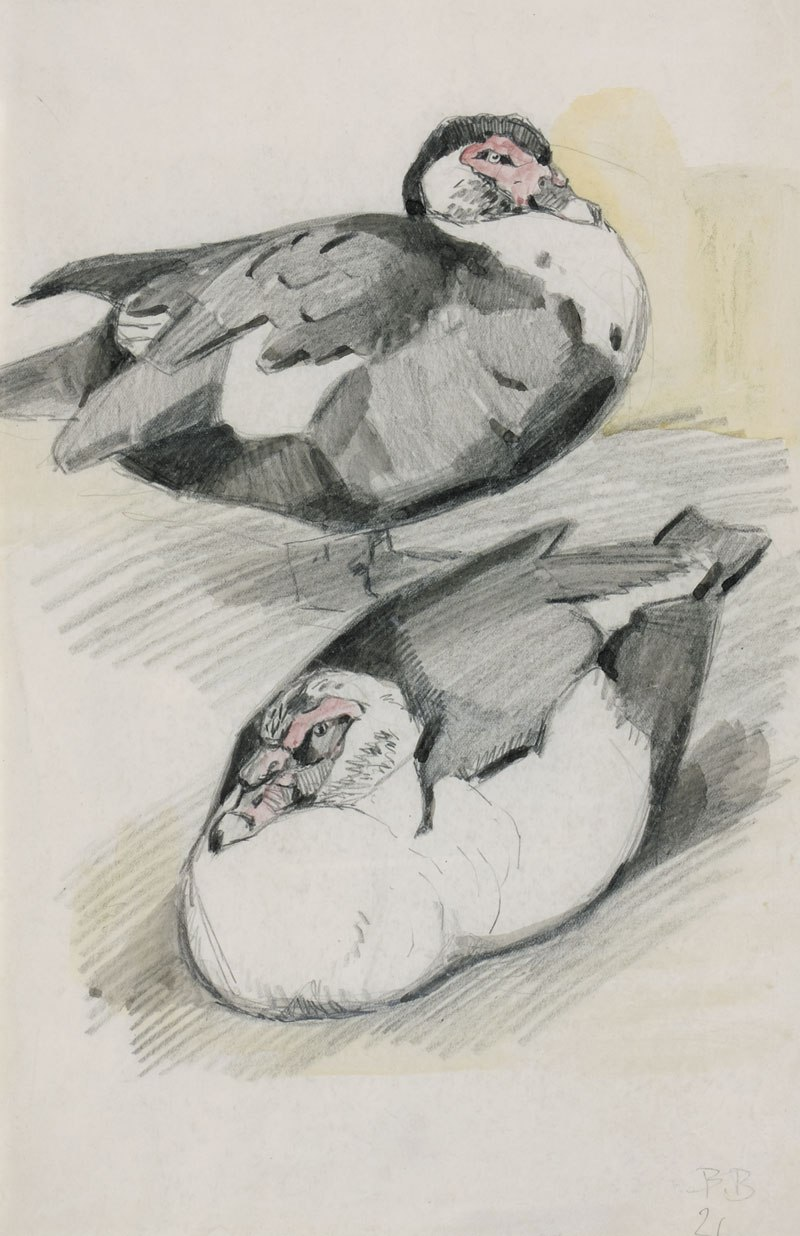 Sketch of two ducks.