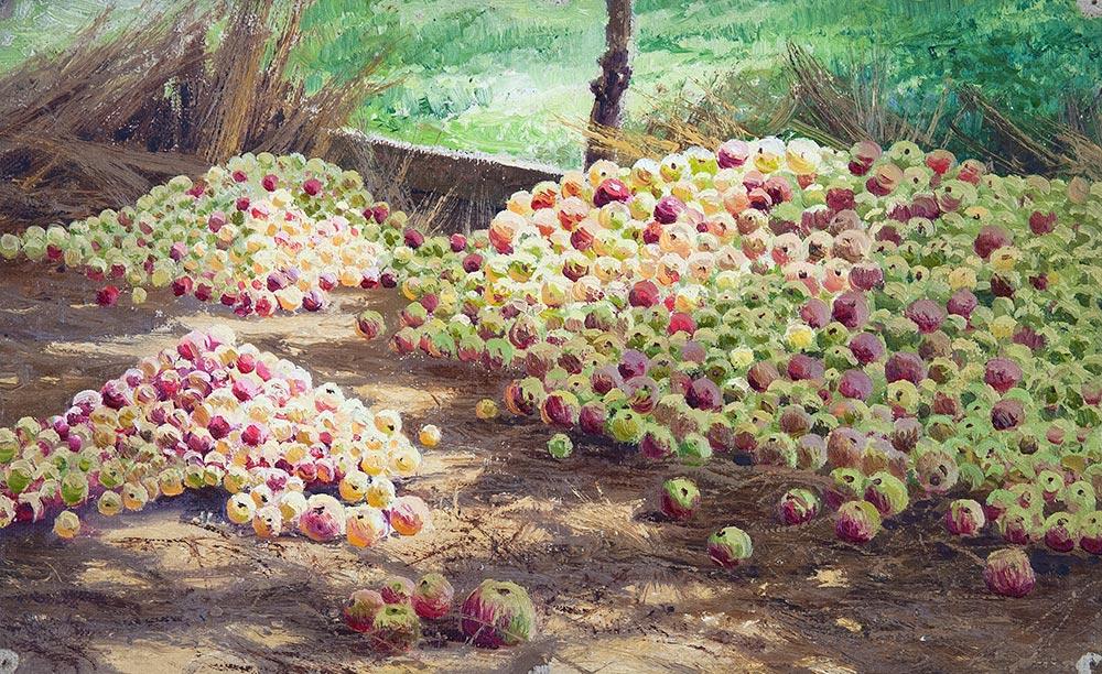 Сбор яблок в Черниговской губернии.