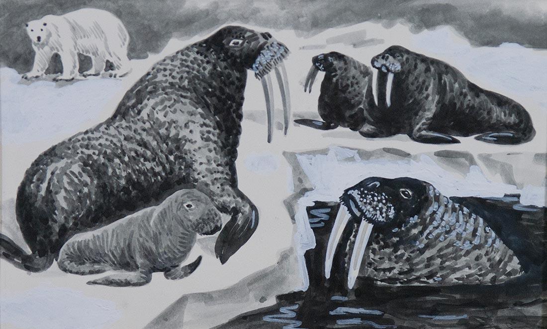 Пляж среди льдов. Иллюстрация к книге В.Корзина