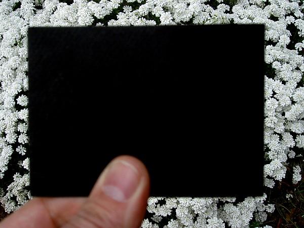 «Весна за черным экраном». Серия из 4-х фотографий, наклеенных на 10 мм мдф.
