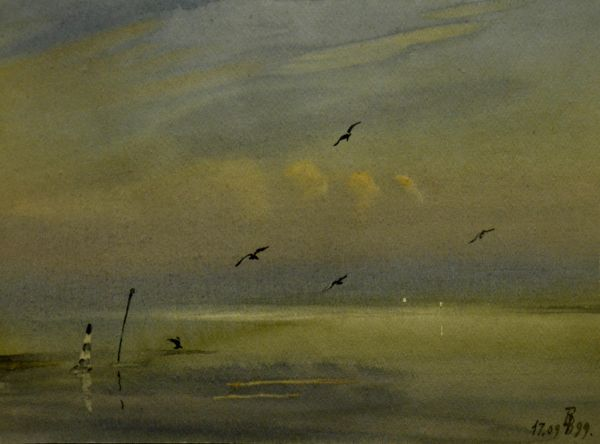 Чайки над заливом.