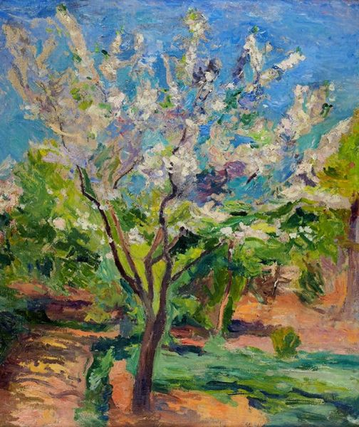 Крым. Цветущее дерево.