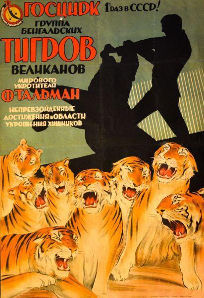 Группа бенгальских тигров великанов.