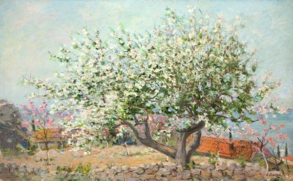 Весна в Крыму. Цветет Черешня.