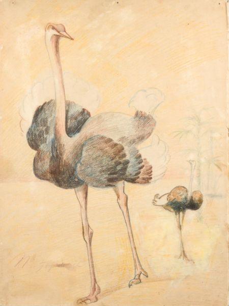 Два страуса.