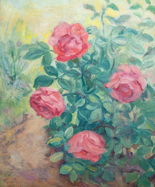 Розы на кусте.