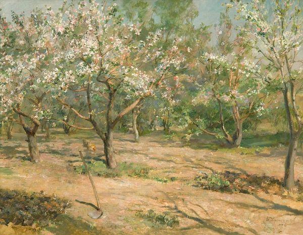 Цветущие яблони.